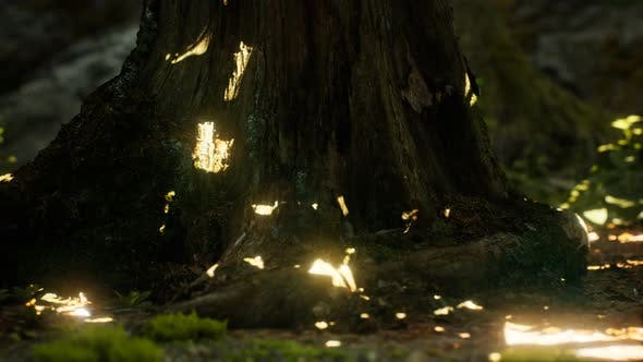 Thumbnail for Sonnenlicht Strahlen strömen durch Blätter in einem Regenwald