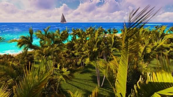 Beach Of Palms