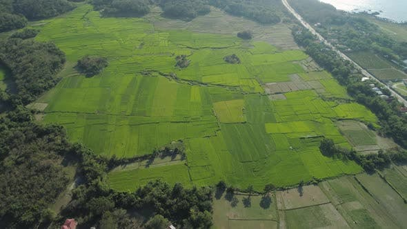 Cover Image for Landscape with Rice Terrace Field Philippines, Luzon