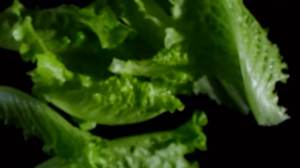 Salad Leaves on Dark Background