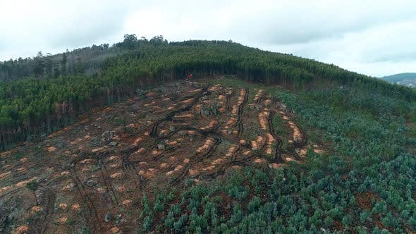 Thumbnail for Aerial View of Deforestation