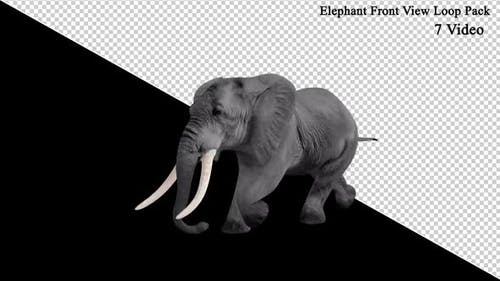 Elephant Front View Loop Pack