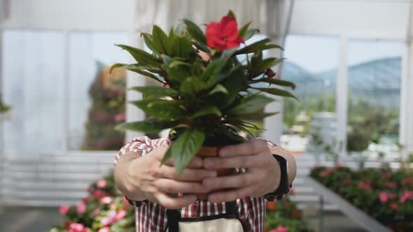 Thumbnail for Flower Pot in the Hands of the Gardener