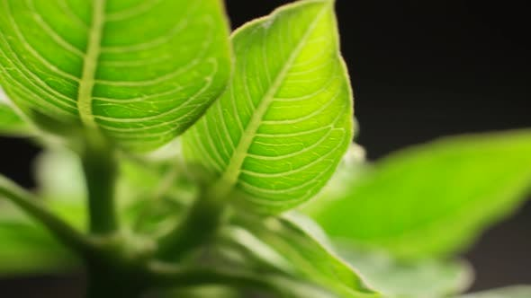 Thumbnail for Green Plants And Trees