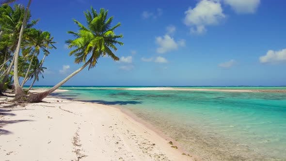 Thumbnail for Tropical Beach with Palm Trees in French Polynesia 87