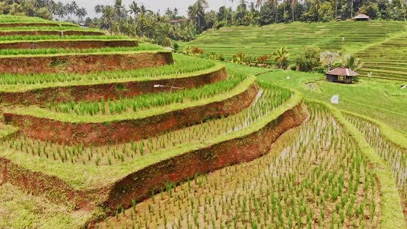 Thumbnail for Exquisite View of the Rice Terraces
