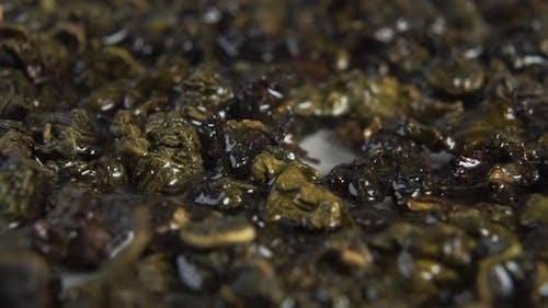 Soaking steeping dry green tea leaves. Brewing