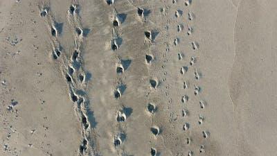 Horse footprints on the beach