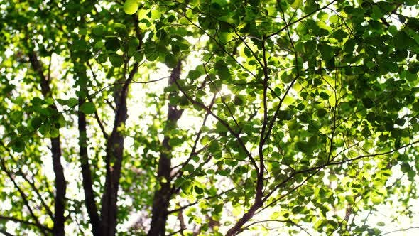 Thumbnail for Sun Shining Through Tree Leaves and Branches