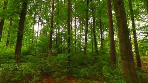 Intensive Green Forest