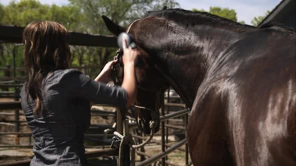 Thumbnail for Slow Motion Shot of A Woman Grooming a Horse