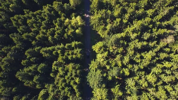Thumbnail for AERIAL: Birdsview on Forest Road with Car, Sunshine, Germany