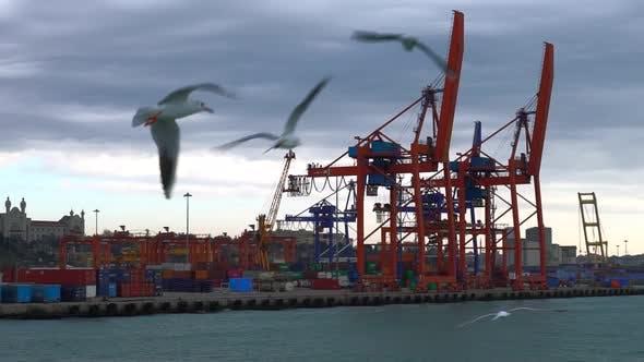 Cargo Harbor And Gulls