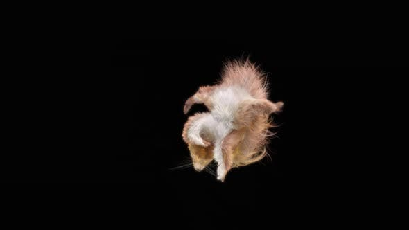 Squirrel Dancing HD