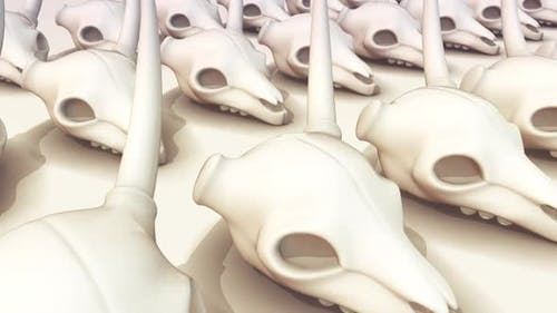 A Lot Of Deer Skulls In A Row Hd