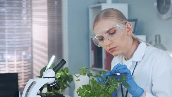 Thumbnail for In Modern Laboratory Smart Woman in Lab Coat and Protective Glasses Examining the Plant in Pot