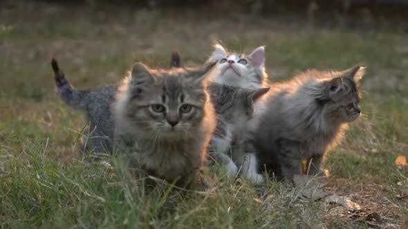 Cute Kittens Playing In The Garden