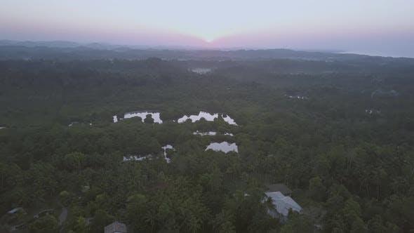 Morning Sunlight Lights Deserted Boundless Tea Plantations