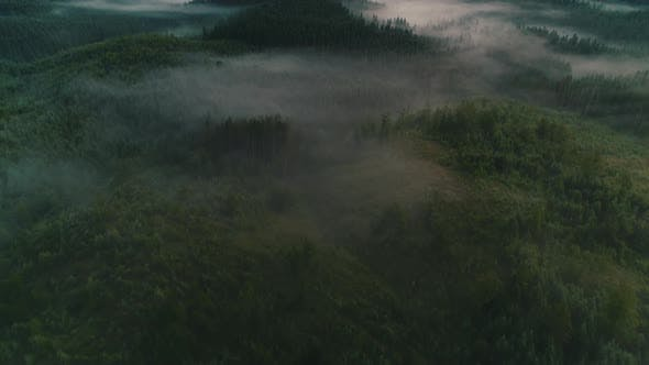 Fog Over Coniferous Forest Aerial View