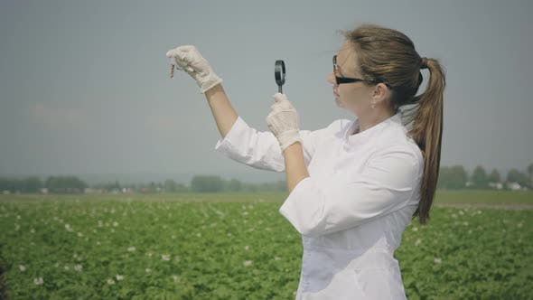 Thumbnail for Female biologist examines pests