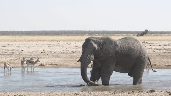 Thumbnail for African Elephant Bathing