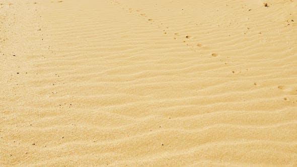 Thumbnail for Sandy Dunes
