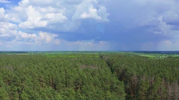 Thumbnail for Fliegen über Baumkronen im Wald
