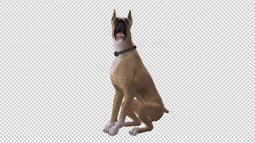 Dog - Great Dane - Seating and Barking - Loop