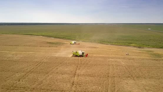 Thumbnail for Panoramic View Farmers in Field and Harvesters Cut Off Crop