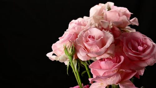a bouquet of pink blooming roses rotates on a black background
