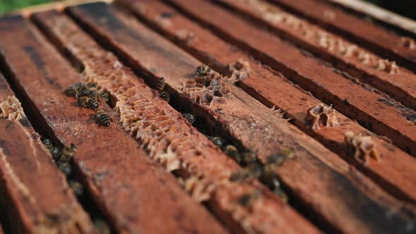 Close Up View of the Opened Hive Body Showing the Frames Populated By Honey Bees. Honey Bees Crawl
