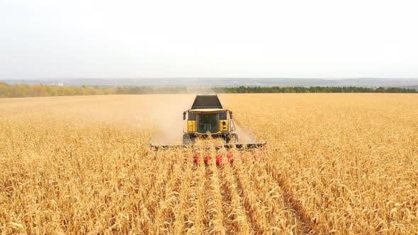 Luftaufnahme des Erntemaschinens, der Maisernte in Ackerland sammelt