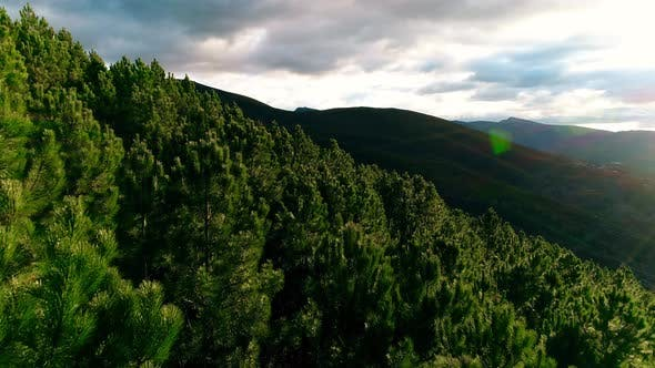 Flying Above Green Forest
