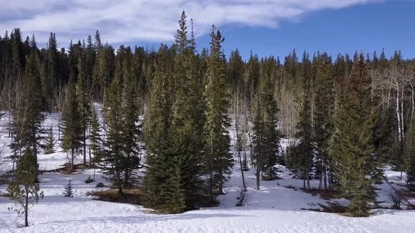 Forest Black Hills in Winter in South Dakota United States