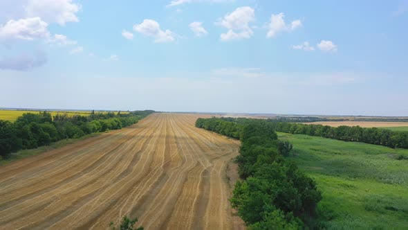 Thumbnail for Aerial View Of Farm Fields. Harvesting.