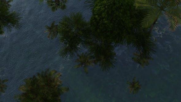 Thumbnail for Flooded Rainforest 2