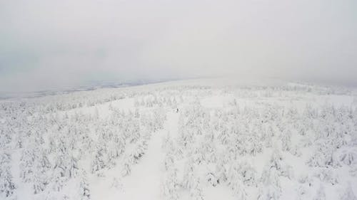 A Snowcovered Forest Winter Landscape  Top View