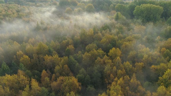 Thumbnail for Forest Aerial View in Foggy Morning