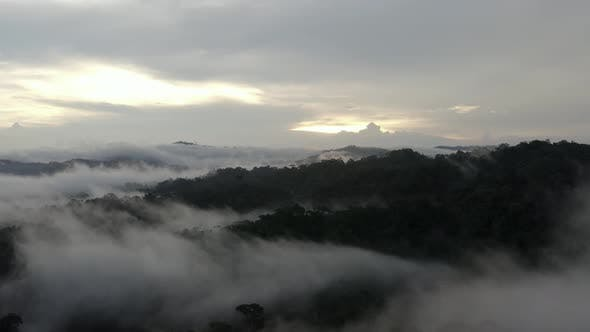 Aerial view of a tropical forest with a layer of dense fog hanging over the tree canopy