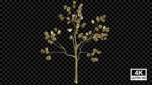 Growing Golden Box Tree 4K