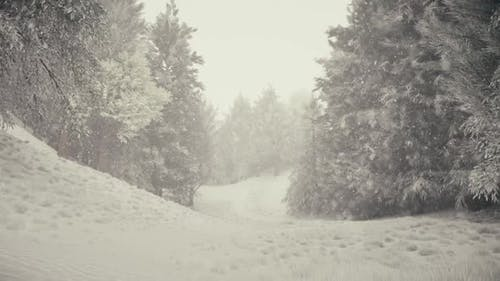 Winter Snowfall in the Forest Gentle Lovely Snowy Christmas Morning with Falling Snow