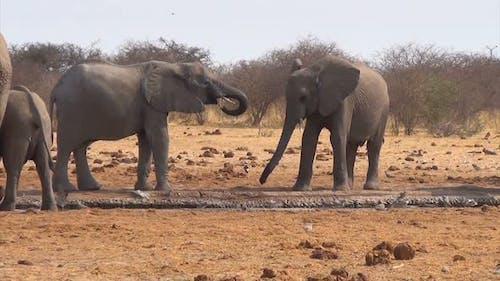 African elephants at a muddy waterhole