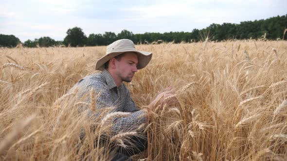 Thumbnail for Close Up of Young Agronomist Sitting at Cereal Meadow and Examining Ripe Barley Stalks. Male Farmer