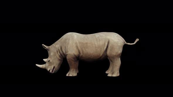 Thumbnail for 4K Rhinoceros Eat
