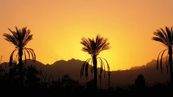 Thumbnail for Palm Tree at Sunset