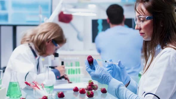 Thumbnail for GMO Testing in Modern and High End Biotechnology Laboratory