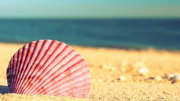 Thumbnail for Beach 4