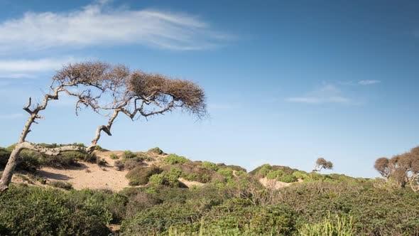 Thumbnail for morocco coast atlantic beach scenic tree