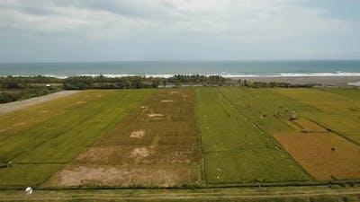 Rice Terraces on Bali