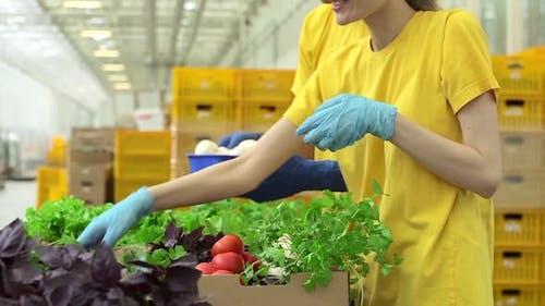 Freiwillige Mann und Frau verpacken Bio-Gemüse und lächelnd im Light Warehouse Spbd